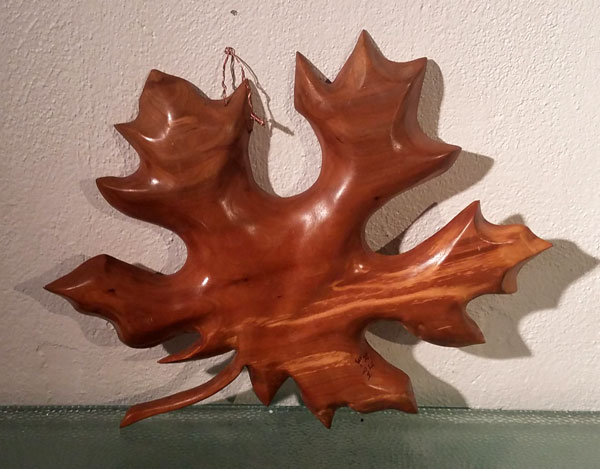 big leaf maple back