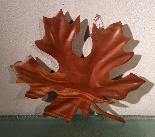 big leaf maple front